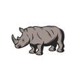 rhinoceros african safari hunt wild zoo animal vector image vector image