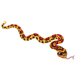 cartoon corn snake vector image vector image