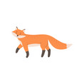 cute red fox with black paws and fluffy tail vector image