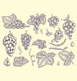 grapes set vineyard collection wine grapes and vector image vector image