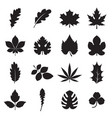 leaf icons isolated on a white background vector image