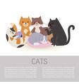 cartoon characters cute tabby cats vector image