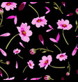 cosmos flowers on black background-flowers in vector image vector image
