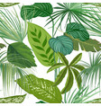 green tropical leaves rainforest decorative vector image