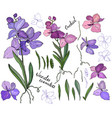 isolated orchid vanda on white different color vector image