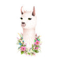 lama cute romantic flowers animal t shirt print vector image vector image