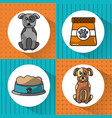 pet dogs and food bowl set icons vector image