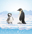 arctic pinguins vector image vector image