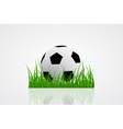 ball on grass 2 vector image