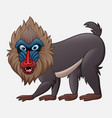 cartoon mandrill baboon isolated on white vector image vector image
