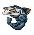 cartoon strong angry barracuda fish mascot vector image vector image