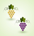 Red and white grape vector image