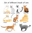 set of cat breeds vector image