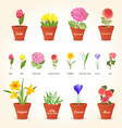 realistic collection of different houseplants in vector image
