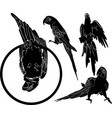 silhouettes parrots birds collection vector image