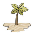 tropical palm tree on sand island flora plant vector image