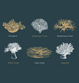 corals collection of vector image vector image
