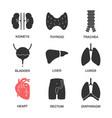 human internal organs glyph icons set vector image vector image
