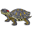 red eared slider turtle vector image vector image