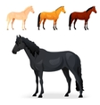 Set of realistic horse with different coats vector image