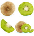 set of realistic kiwi fruits vector image vector image
