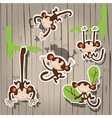 nice cute monkey vector image vector image