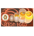 Fresh eggs sit in chicken ready to communicate vector image