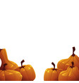 background of orange autumn pumpkins on white vector image