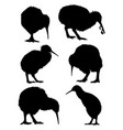 kiwi birds animal silhouette vector image
