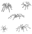 Spiders A sketch by hand Pencil drawing vector image