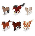 different breeds horses set with pony vector image