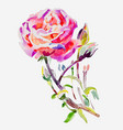 original hand painting watercolor rose vector image vector image