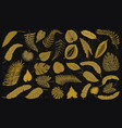 tropical leaves set jungle plants in vintage vector image