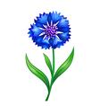 blue cornflower eps10 vector image vector image