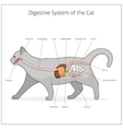 Digestive system of the cat vector image vector image