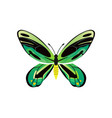 ornithoptera priamus poseidon vector image