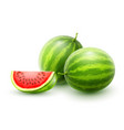 watermelons whole fresh ripe vector image vector image