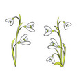 closeup of snowdrops on white vector image vector image