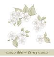 set cherry flowers elements vector image vector image