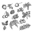 berry hand drawn set sketch fruits vector image vector image