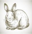 bunny sketch vector image vector image
