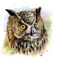 long-eared owl sketchy colored hand-drawn portra vector image