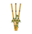 color image cartoon bamboo stems with leaves vector image