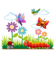 different types of insects in park vector image vector image