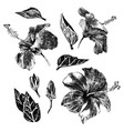 hand drawn hibiscus leaves flowers and buds vector image vector image