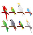 tropical parrot set isolated on white background vector image vector image