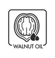 walnut oil drop and natural product ingredient vector image vector image