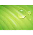 wet leaf vector image vector image