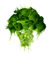Broccoli made of colorful splashes on white backgr vector image vector image