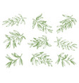 olive branches green greek olives tree branch vector image vector image